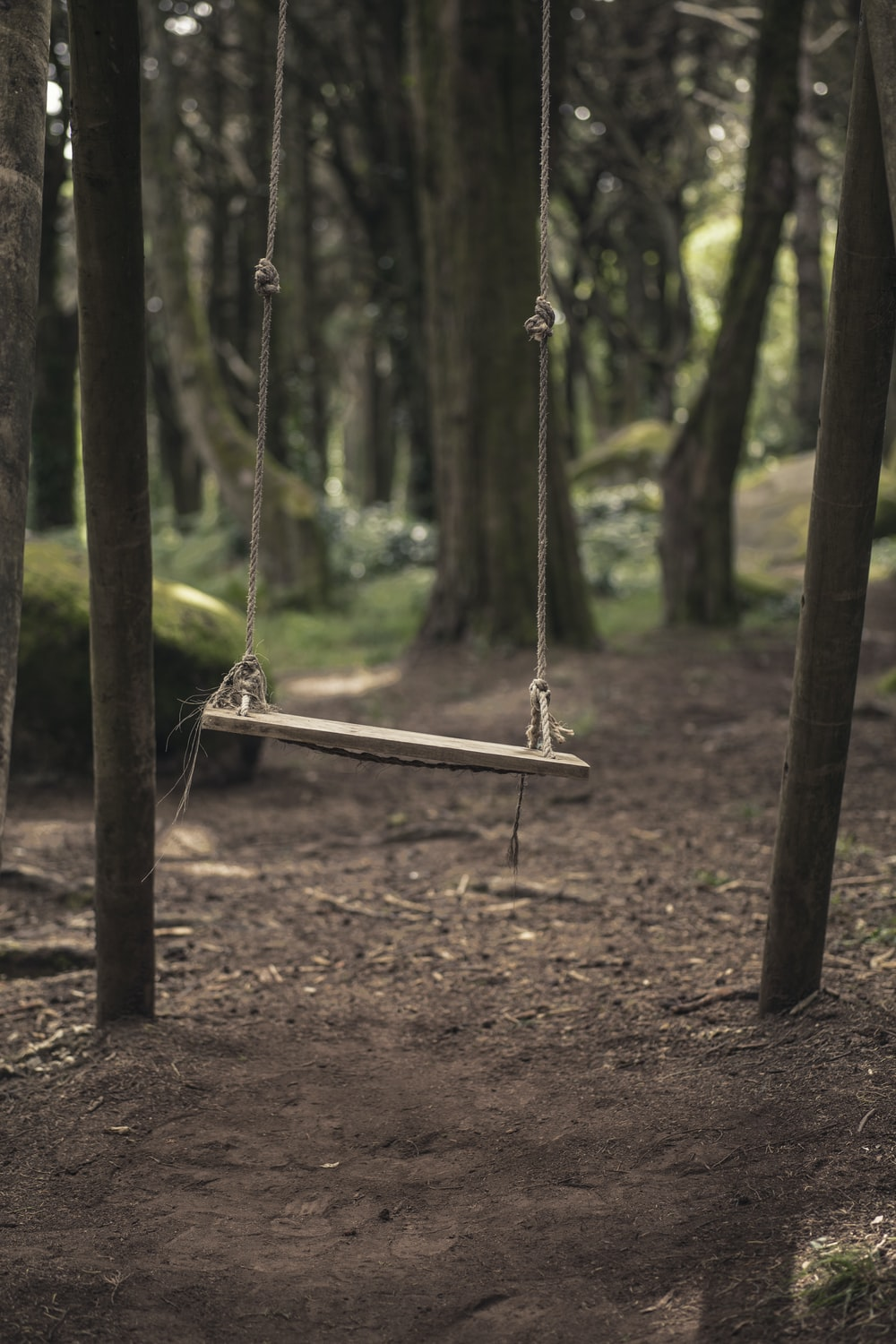 brown wooden swing surrounded with trees