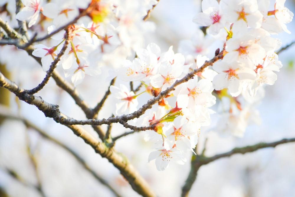 white petaled flower plant