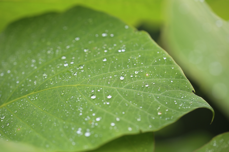 dew on green leaf at daytime