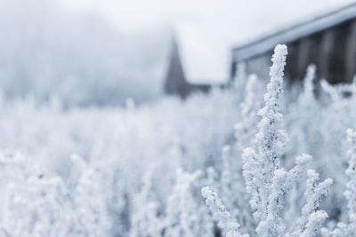 white flowers on field frozen zoom background