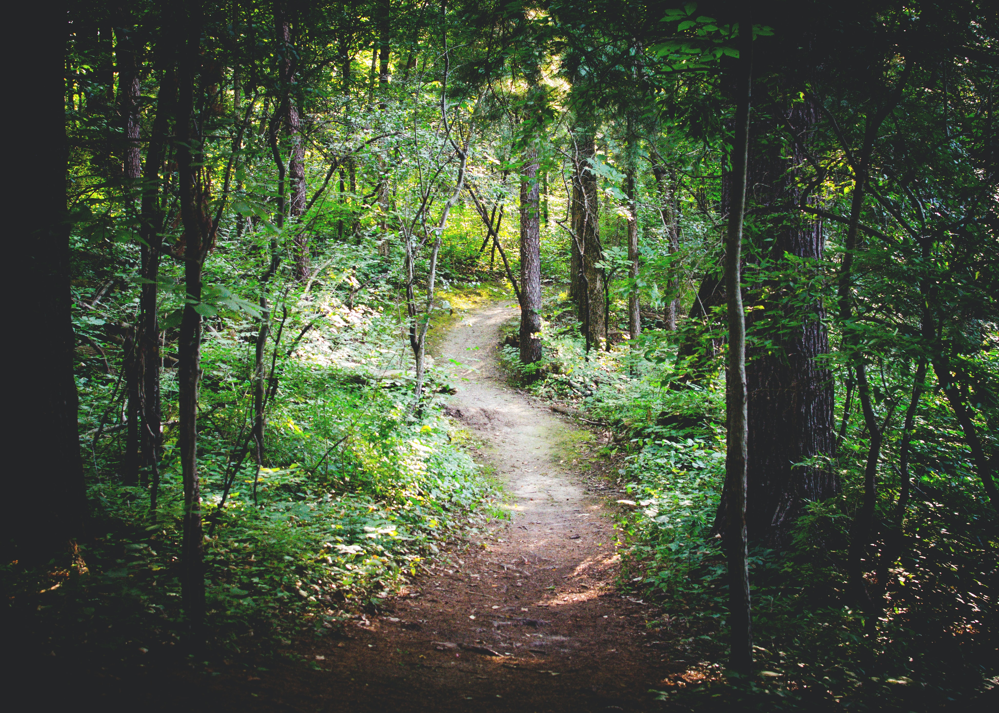A dirt trail in a forest with green leaves, trees, and plants