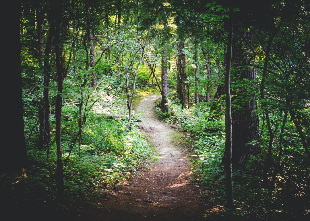 The path less traveled