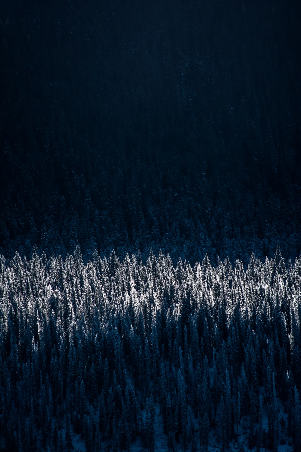 aerial photography of snow-capped trees