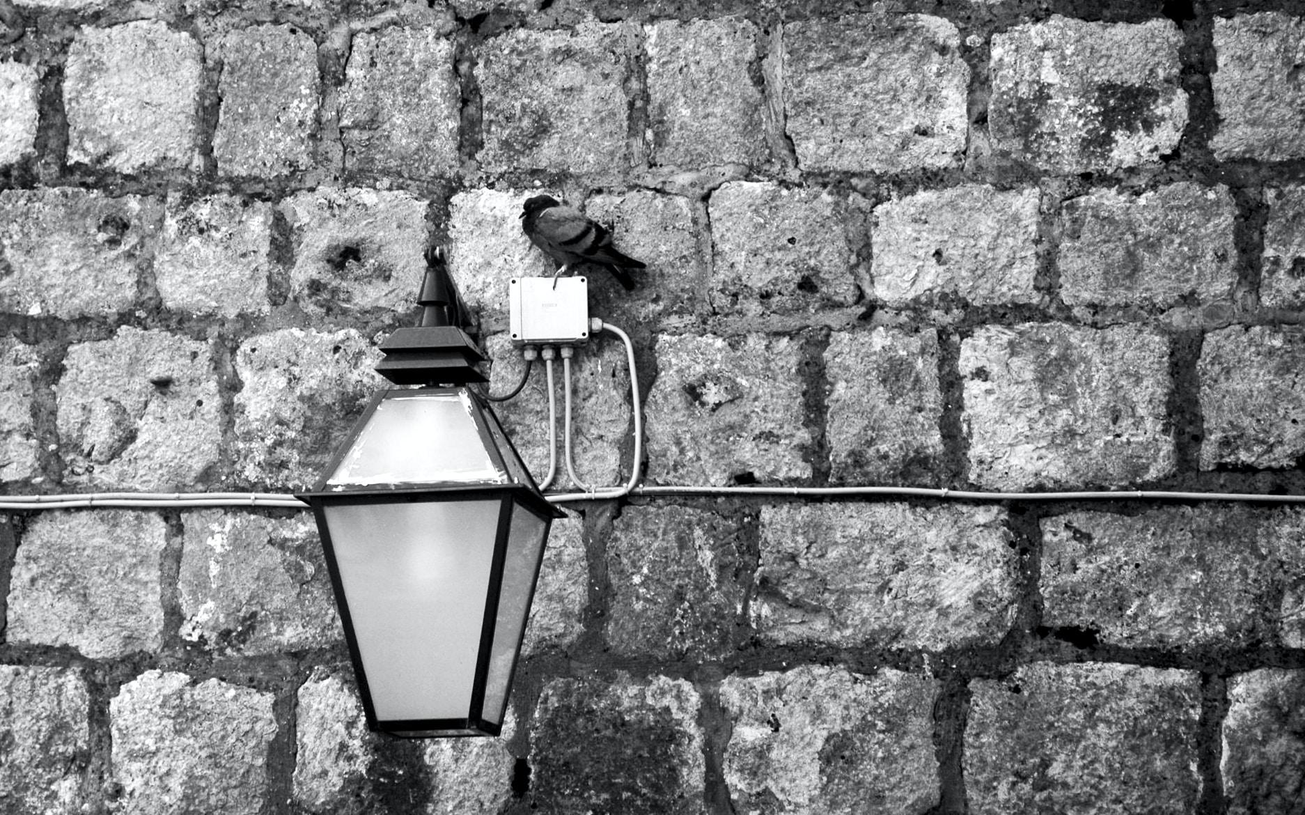 Free Unsplash photo from Mevan Babakar
