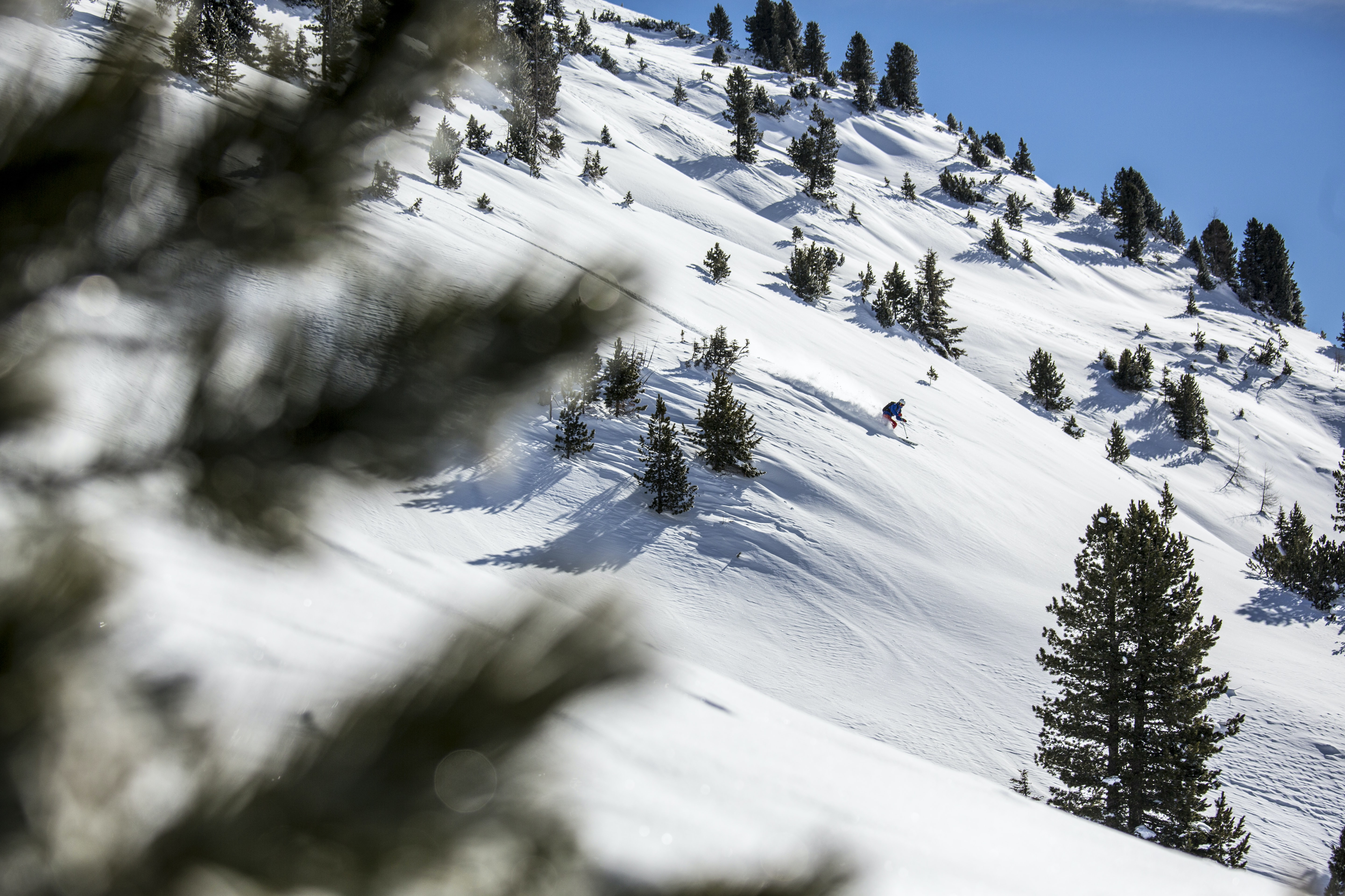 View through pine needles where a man is skiing for sport on the slopes of Wildkogel