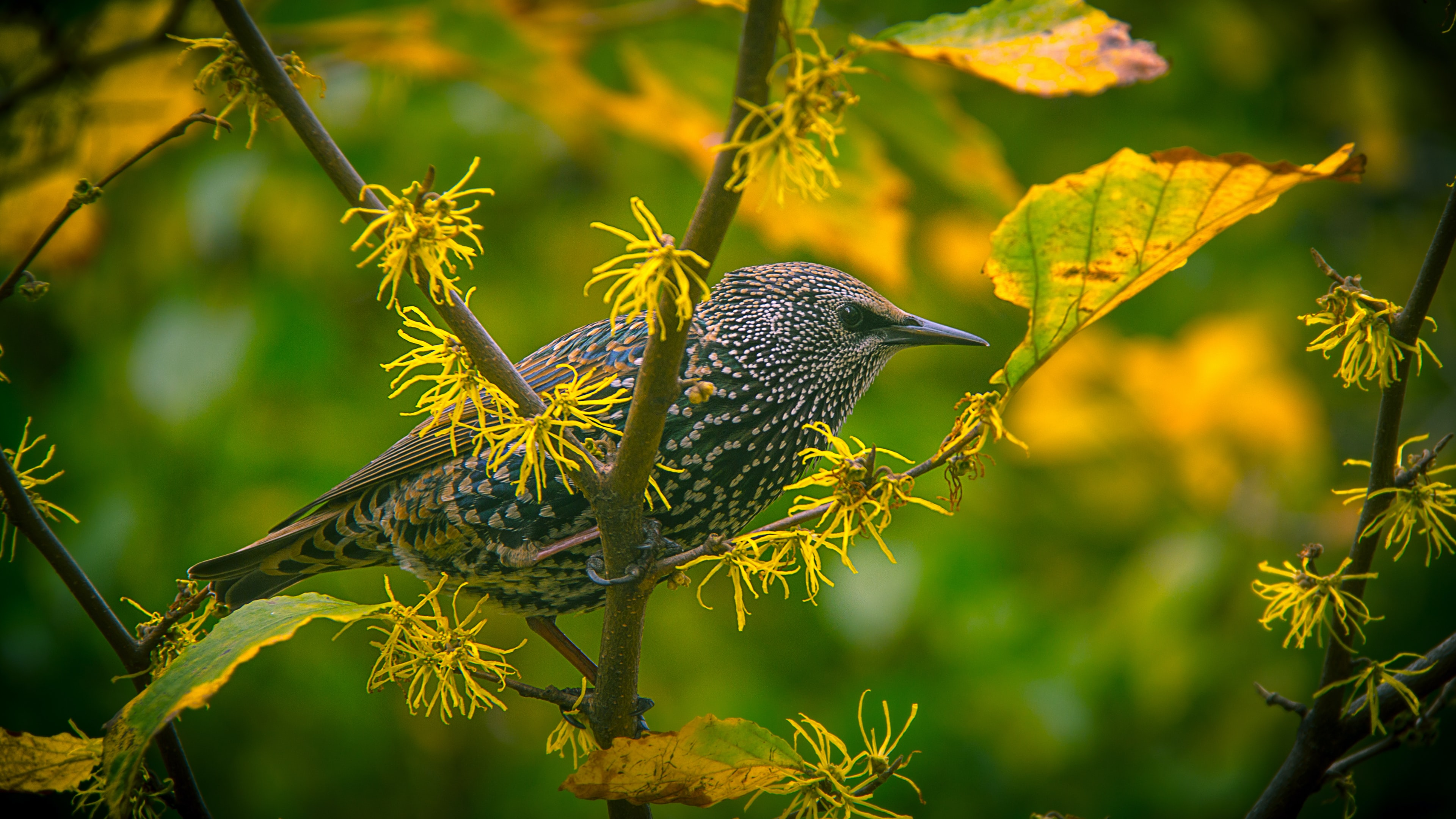 A small bird perched on a branch with yellow withering leaves