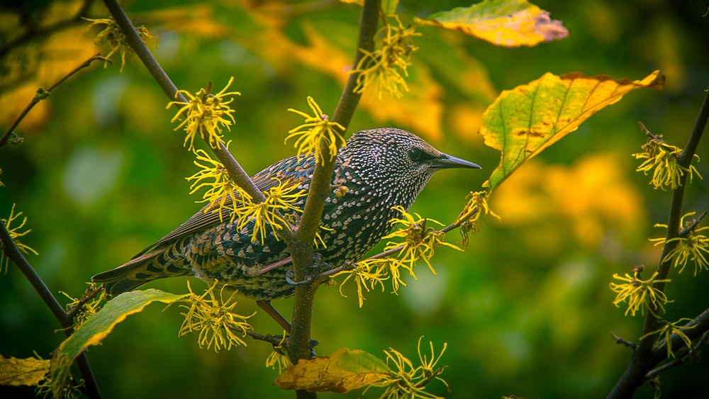 gray bird on tree branch