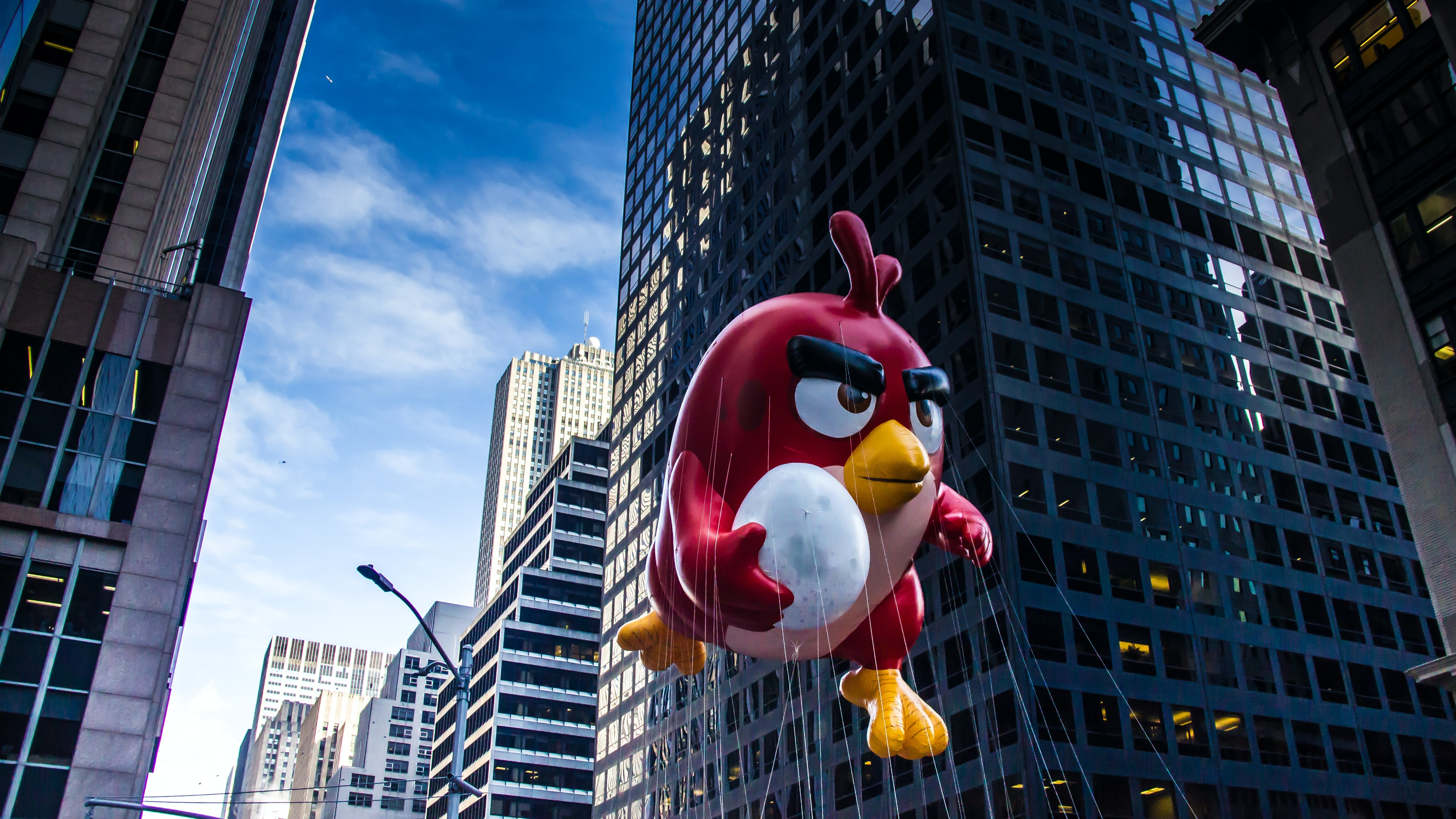 A red angry jumping through the street while holding an egg.
