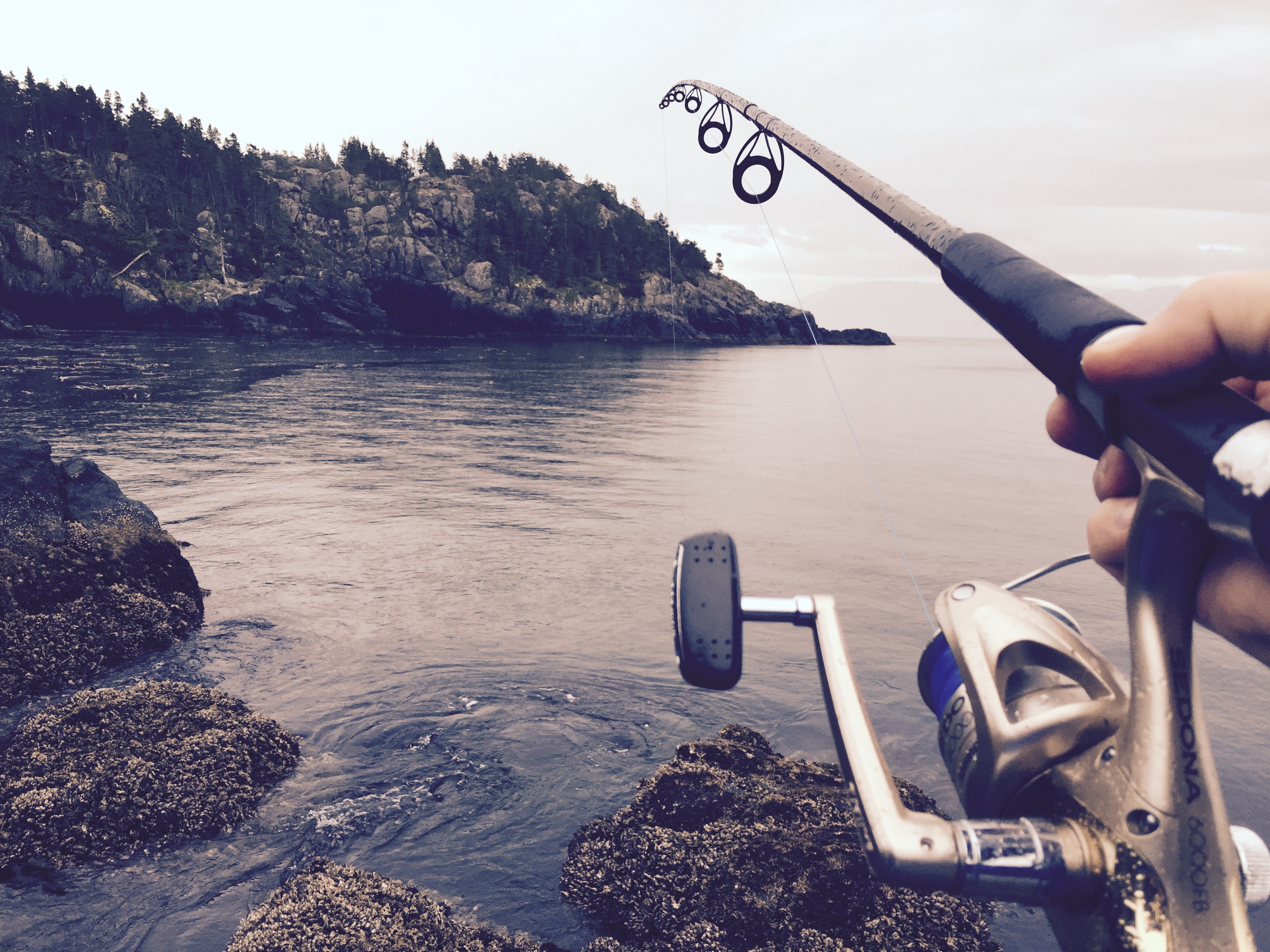 A close-up of a fishing pole at a lake in East Sooke Park.