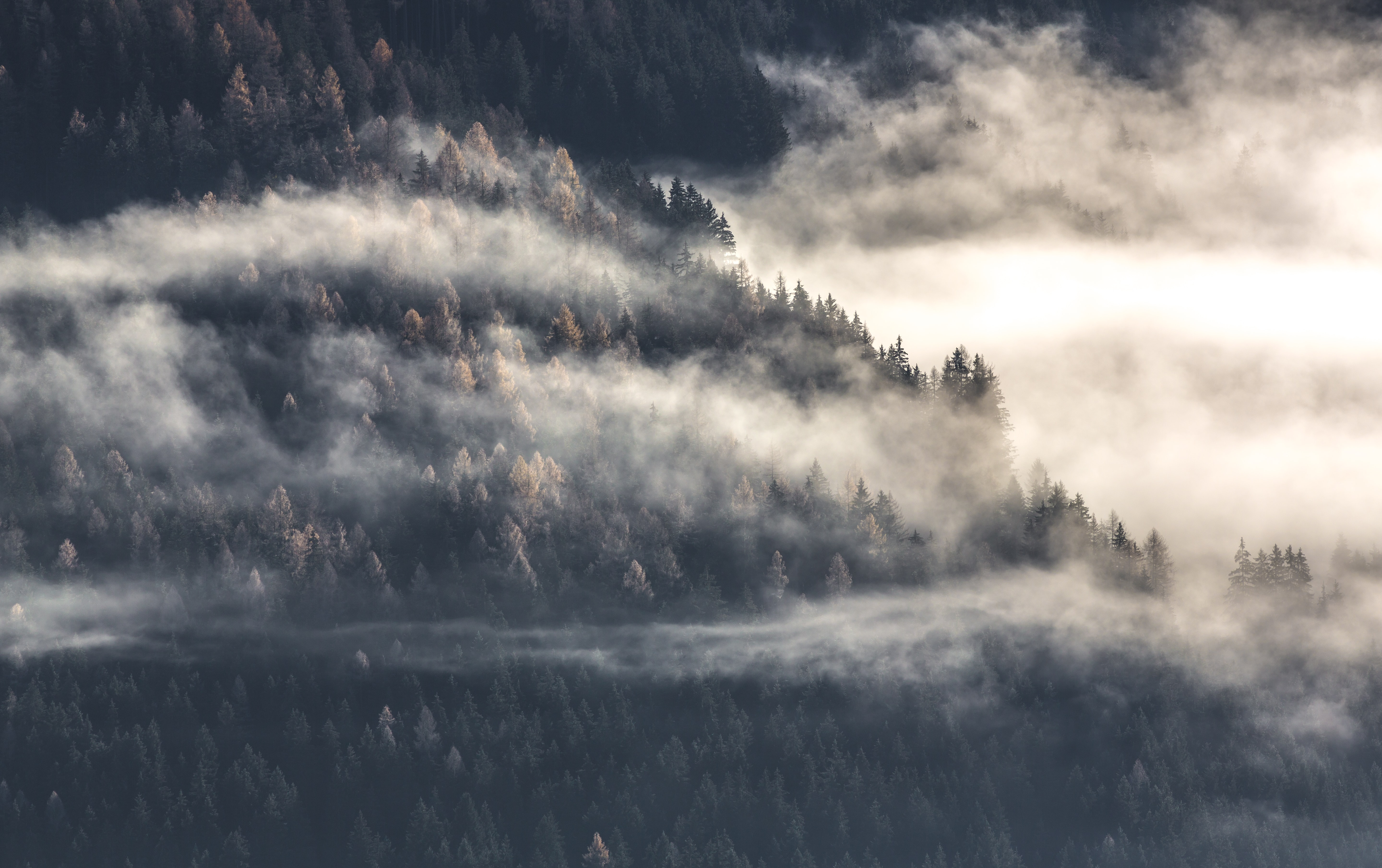 Patchy clouds enveloping a slope covered with evergreen trees