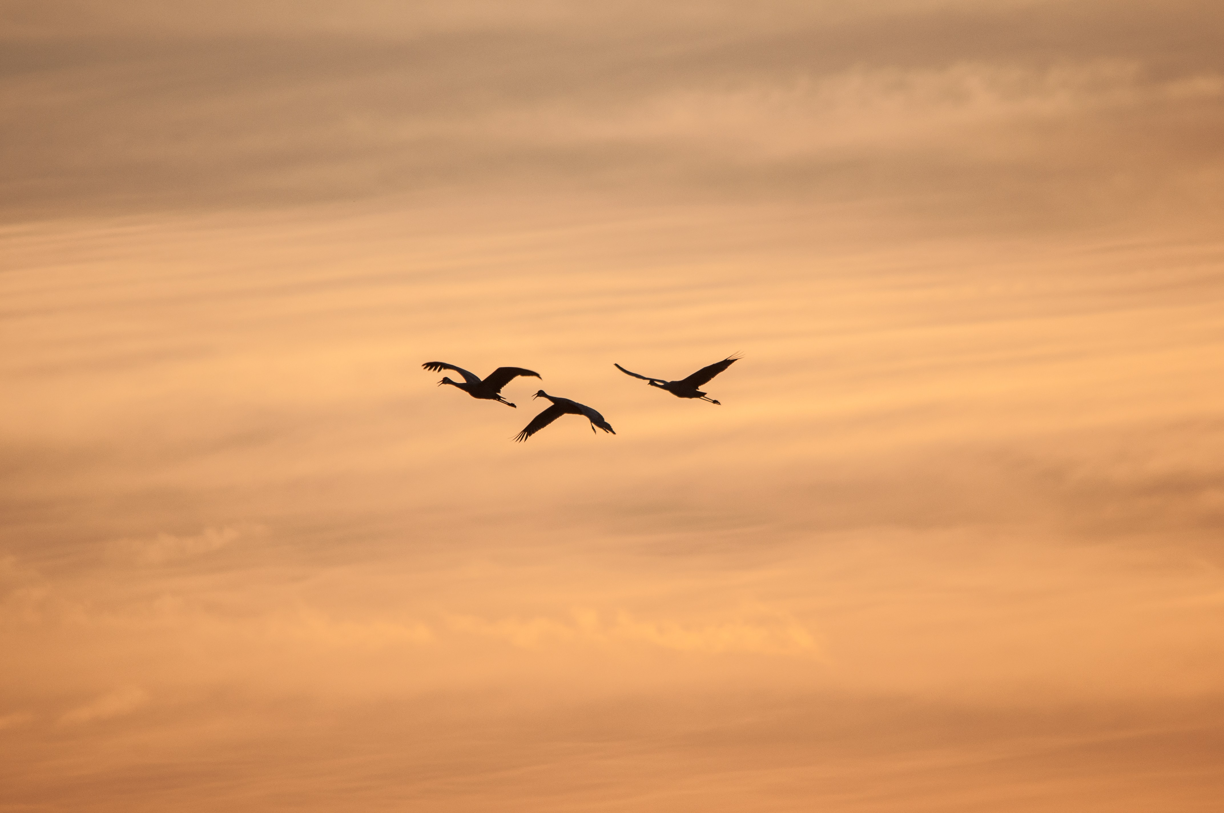 silhouette of three birds flying during sunset