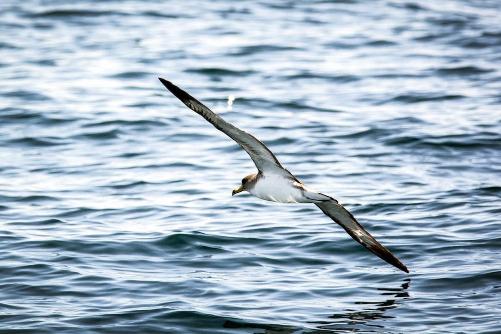 flying bird over body of water