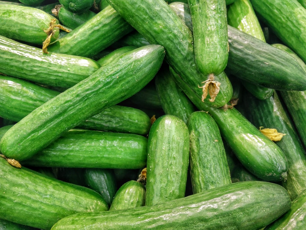cucumber lot
