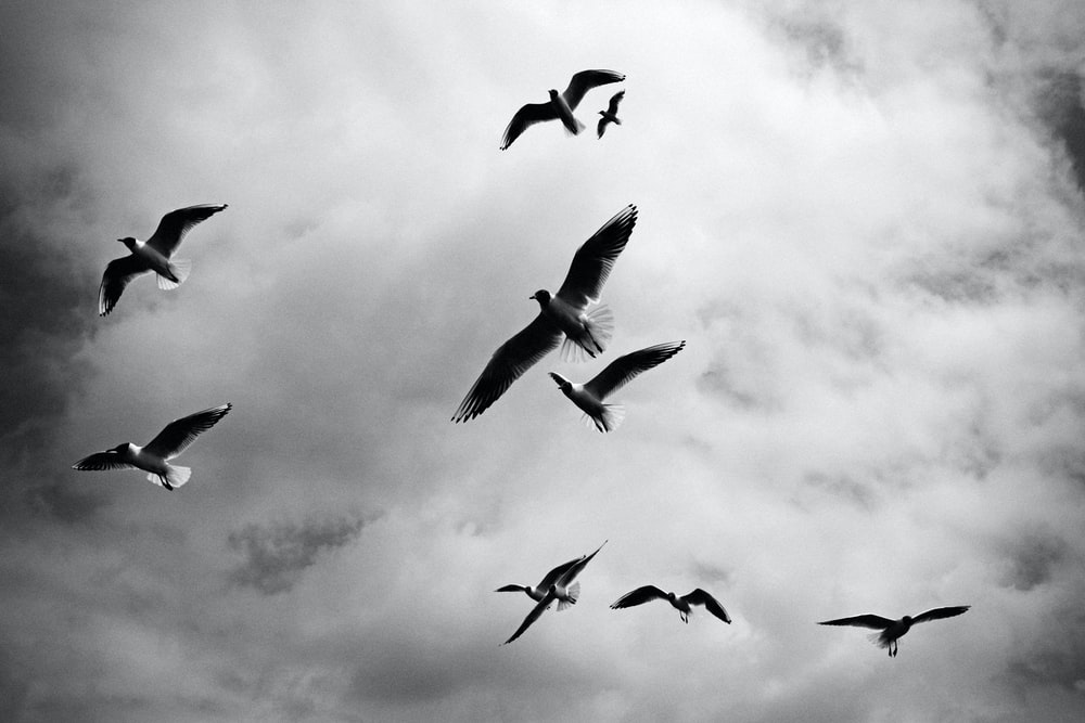 low angle photo of birds flying