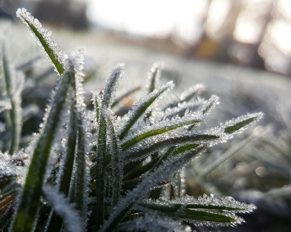 shallow focus photography of grass covered with snow