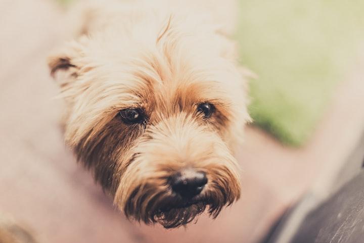 The Misadventures of Sadie the Rescue Pup