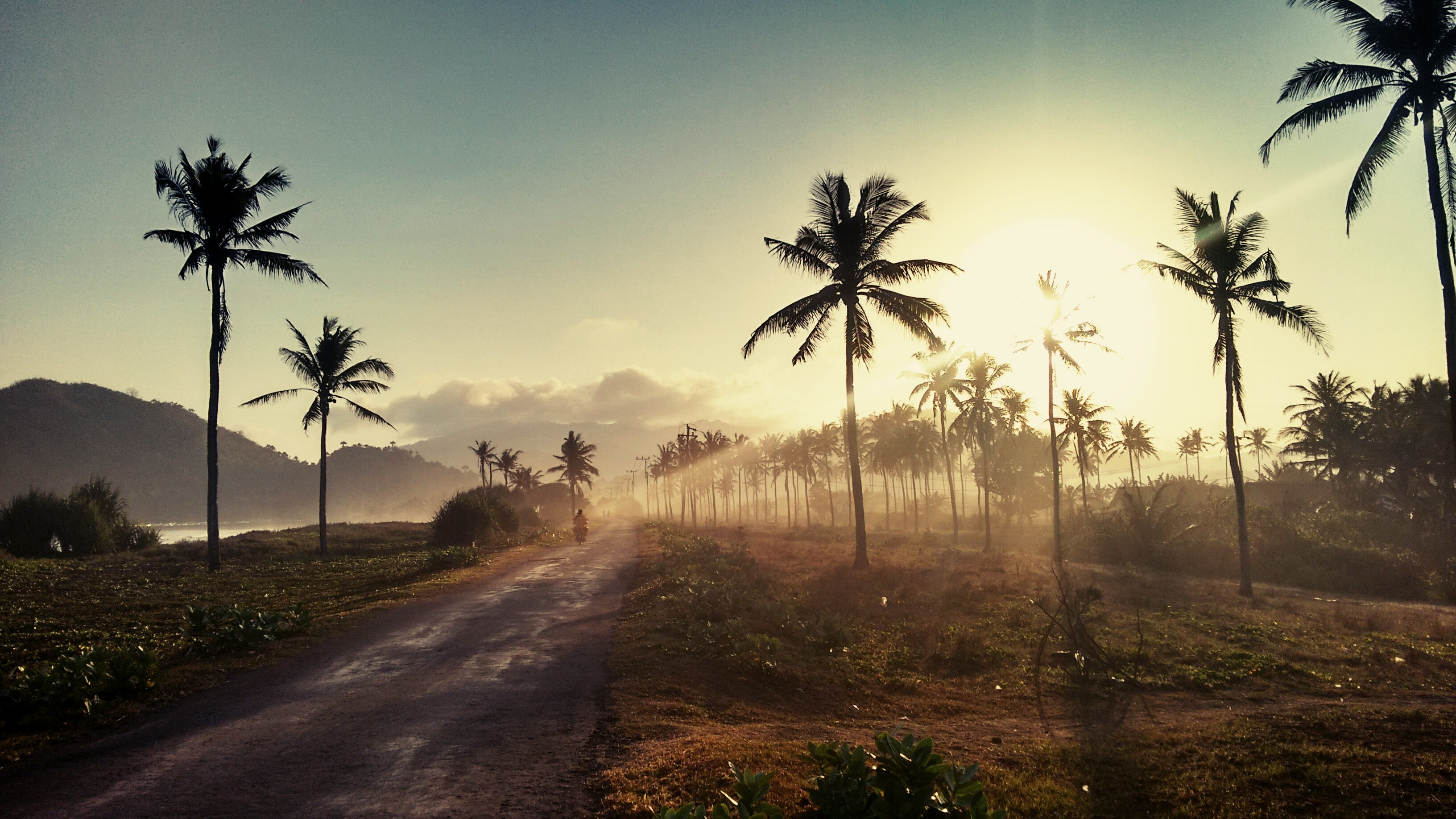 Dirt road between palm trees in East Java, Indonesia at sunset