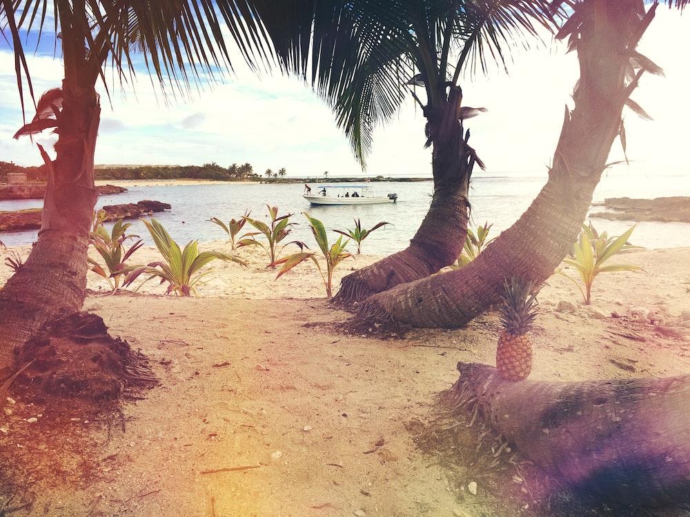 pineapple on tree log along seashore