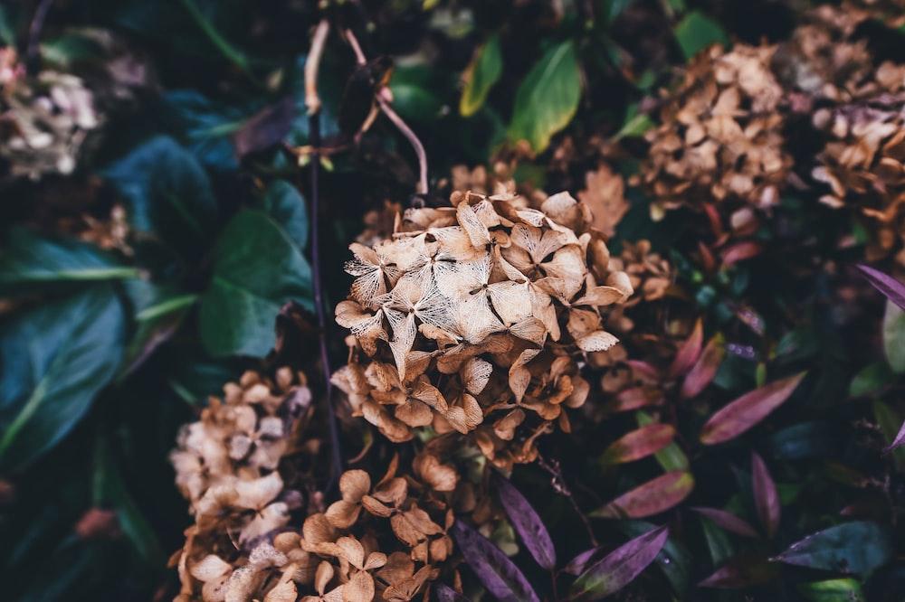 brown petaled flower