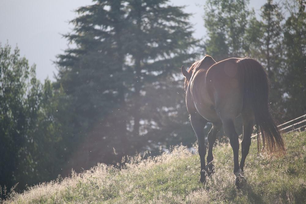 horse walking on fields