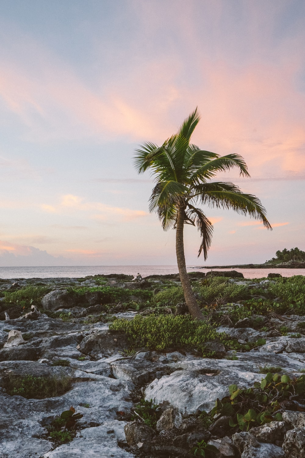 coconut tree near body of water during daytime