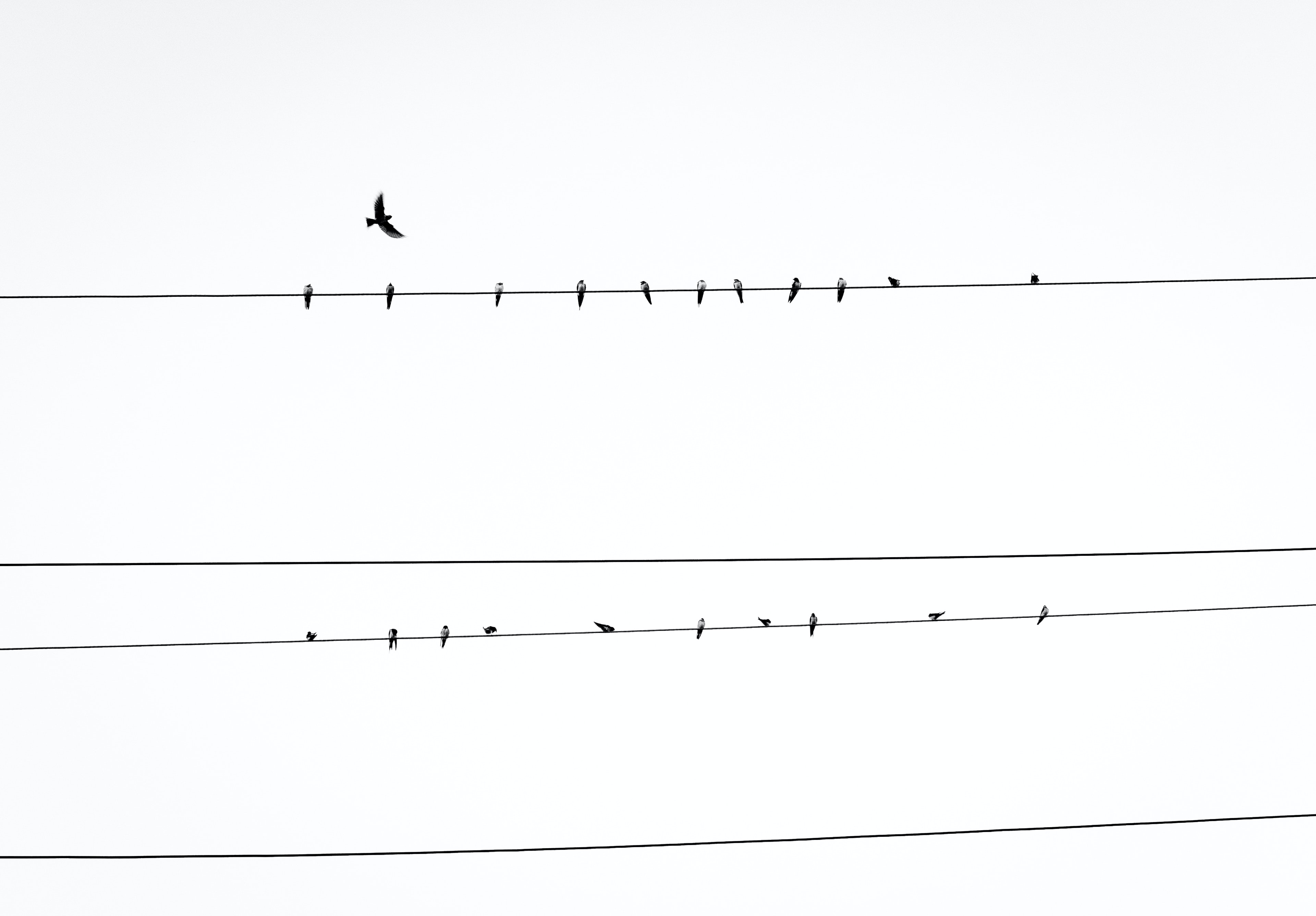 birds resting on power line