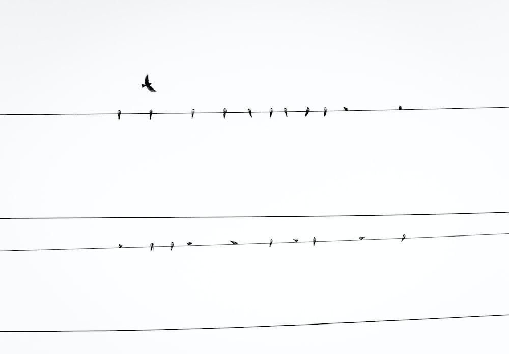 birds resting on power line