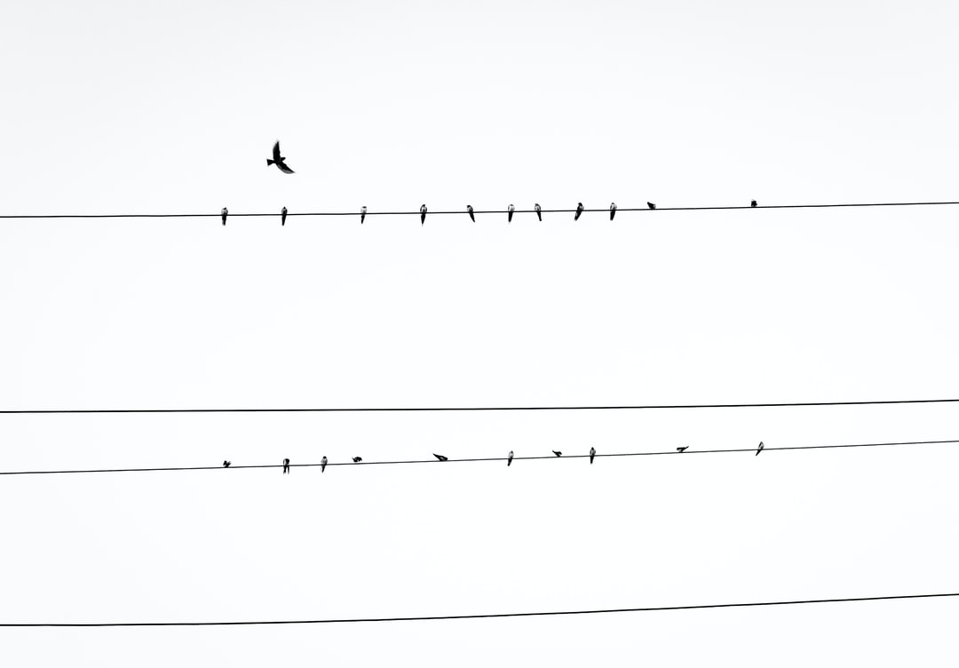 Birds On A Wire Pictures Download Free Images On Unsplash