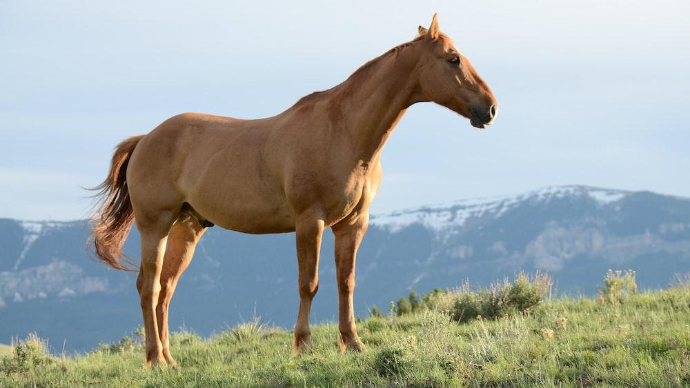 brown horse on green grass hill