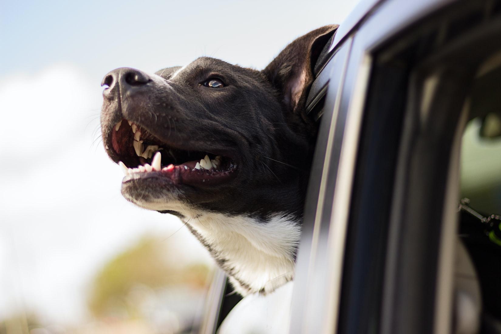 Счастливая собака, выглядывающая из дверного окна