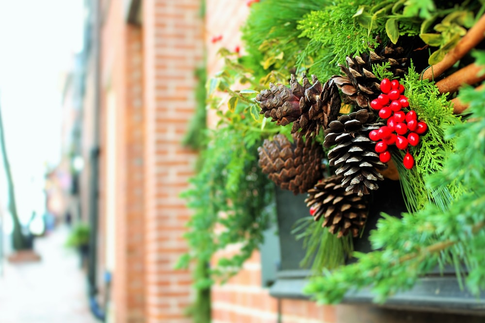 close view of pinecones on green plants on window still