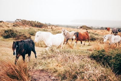 group of horse walking in plain ranch zoom background