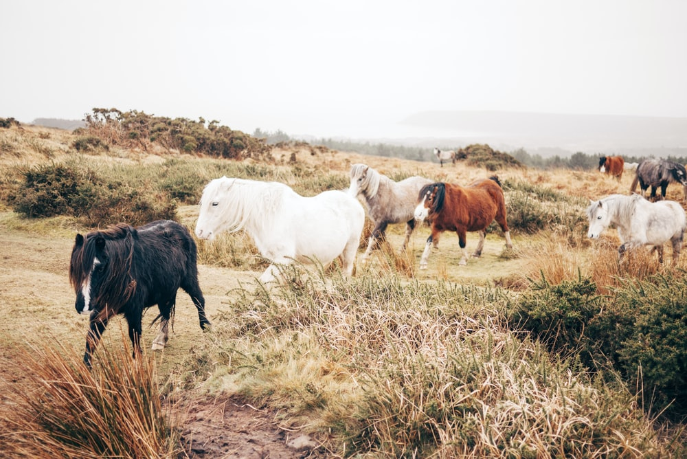 group of horse walking in plain