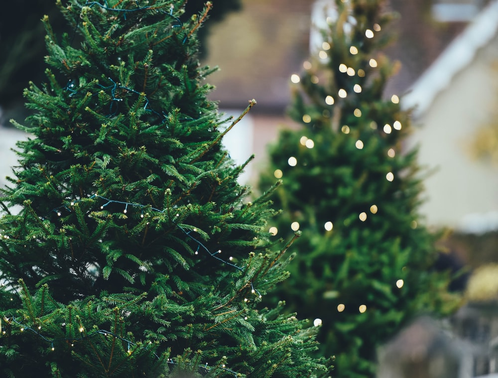 green Christmass tree close-up photography