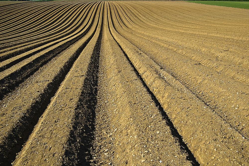 landscape photo of soil