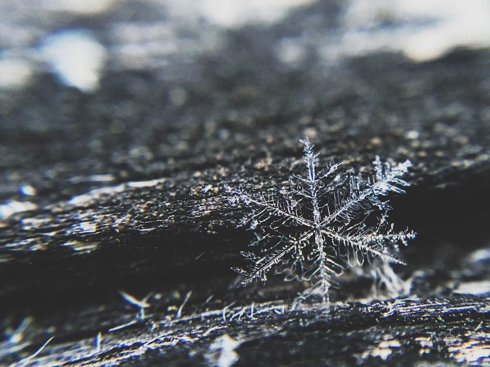snowfla