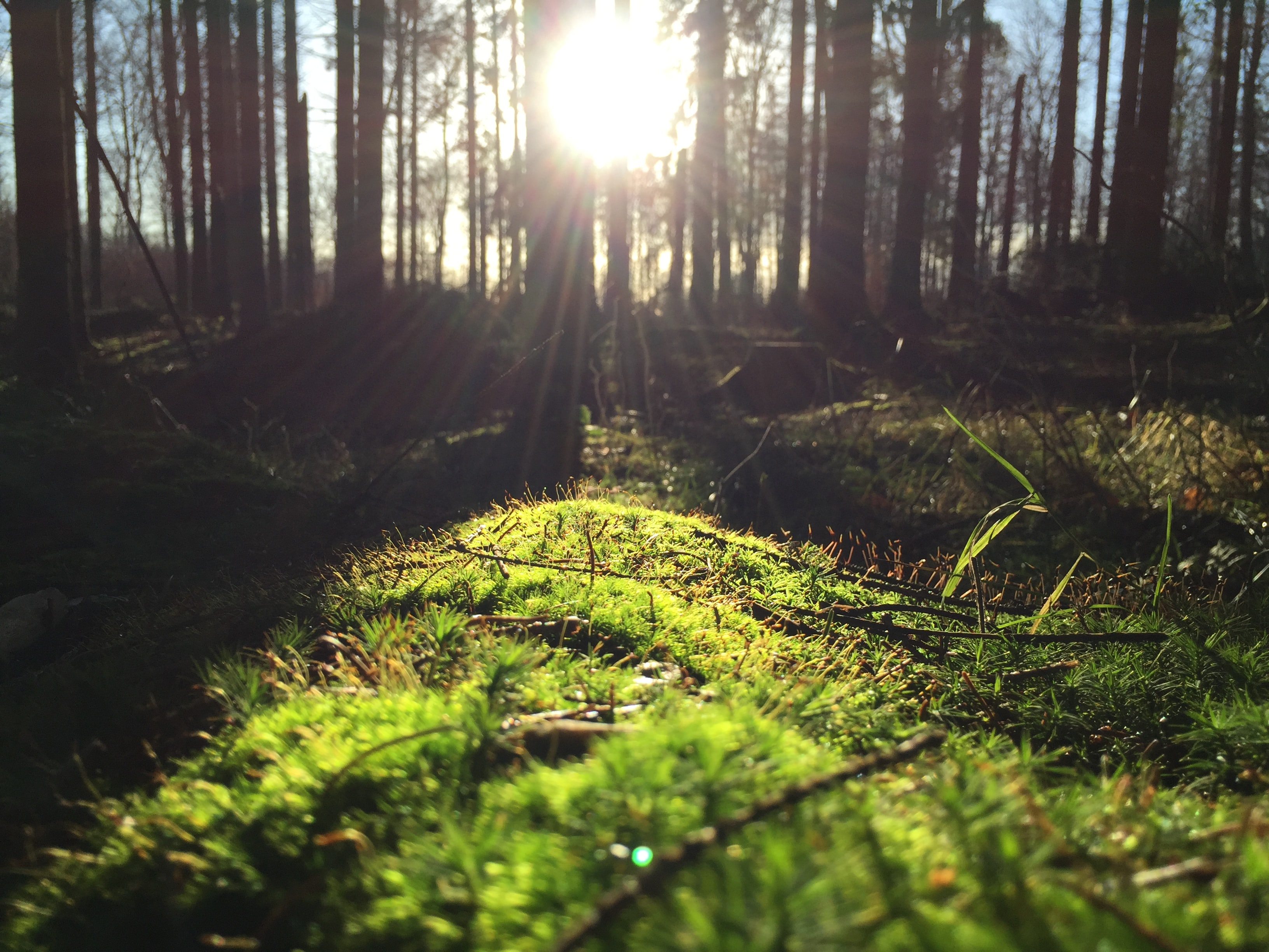 A low shot of green underbrush in a forest under a bright sun