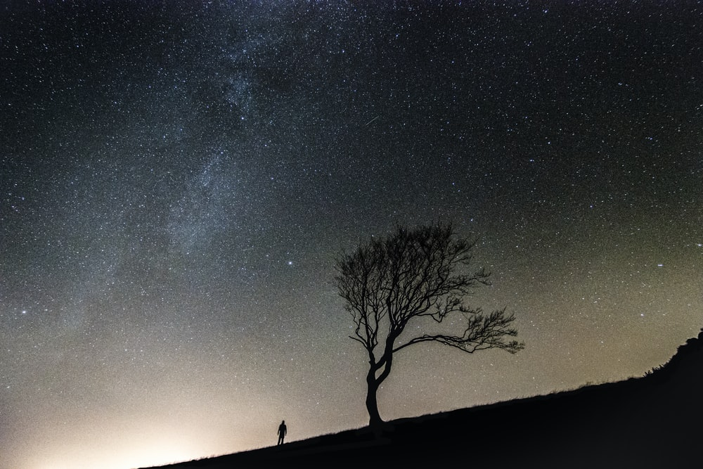 silhouette of person standing along bare tree during nighttime