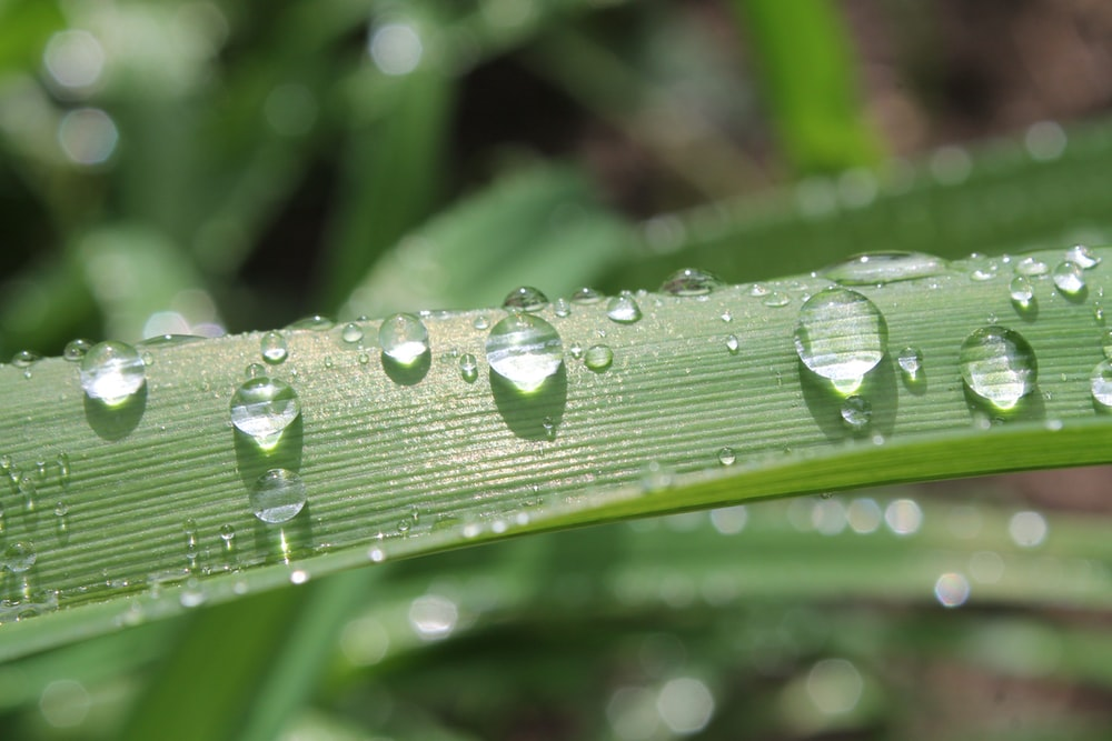 macro photography of water droplets on green leaf