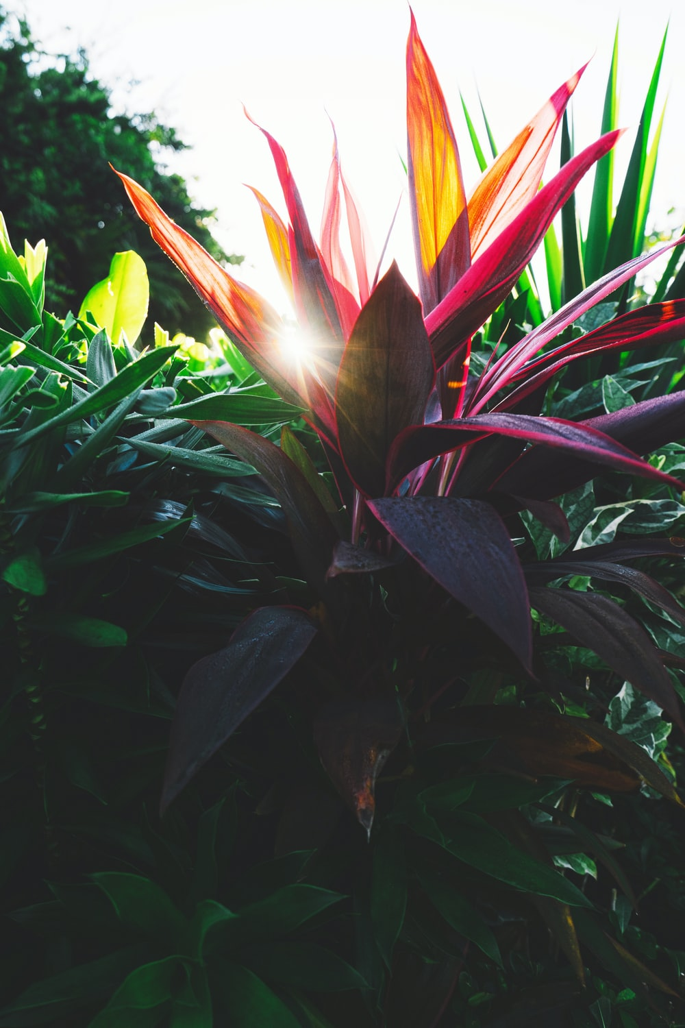 red and green leafed plant during daytime