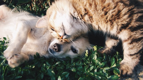Why Pets are great for your mental health during lock down