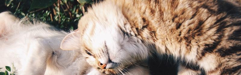 新型コロナの感染リスクはペットにも。感染者のペットをアニコムが受け入れ。