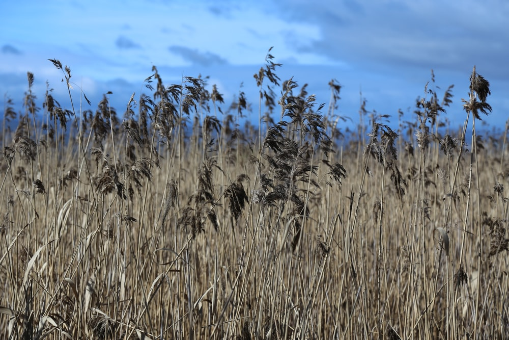 brown brass field during daytime