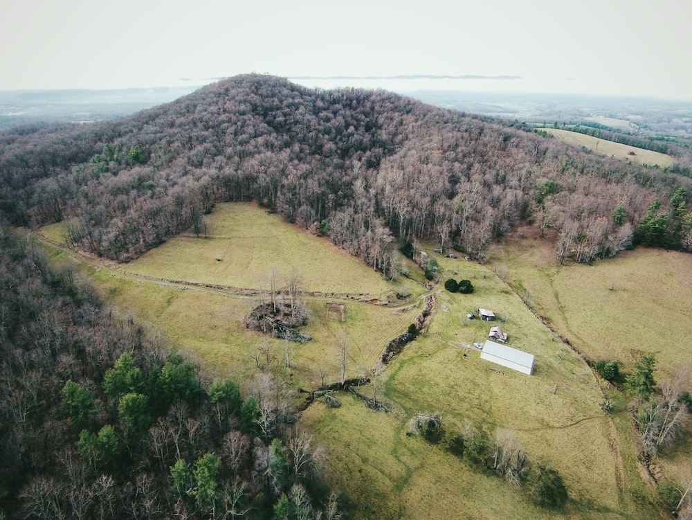 aerial photograph of a forest