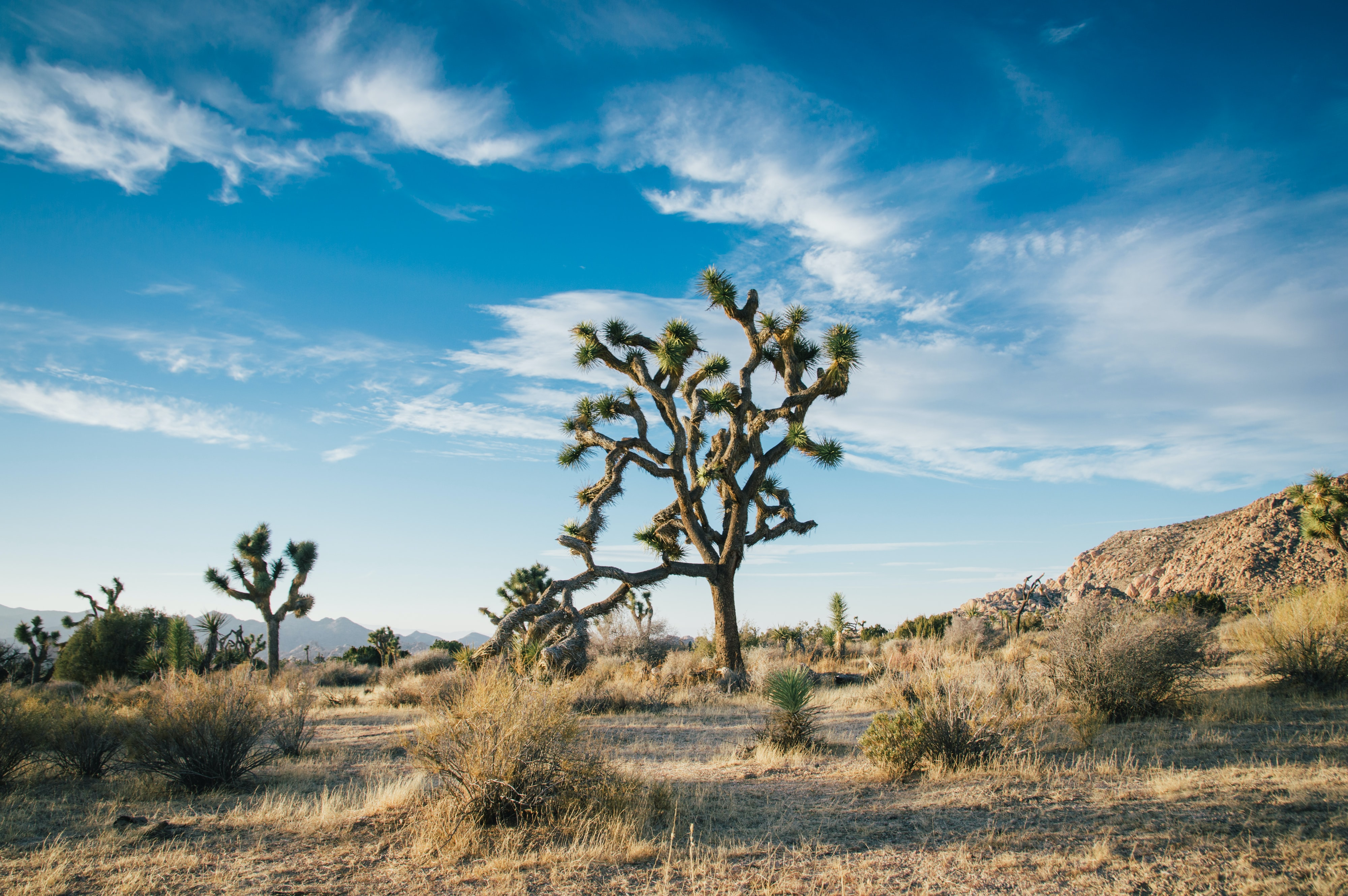 Unique foliage in the deserts of Joshua Tree National Park