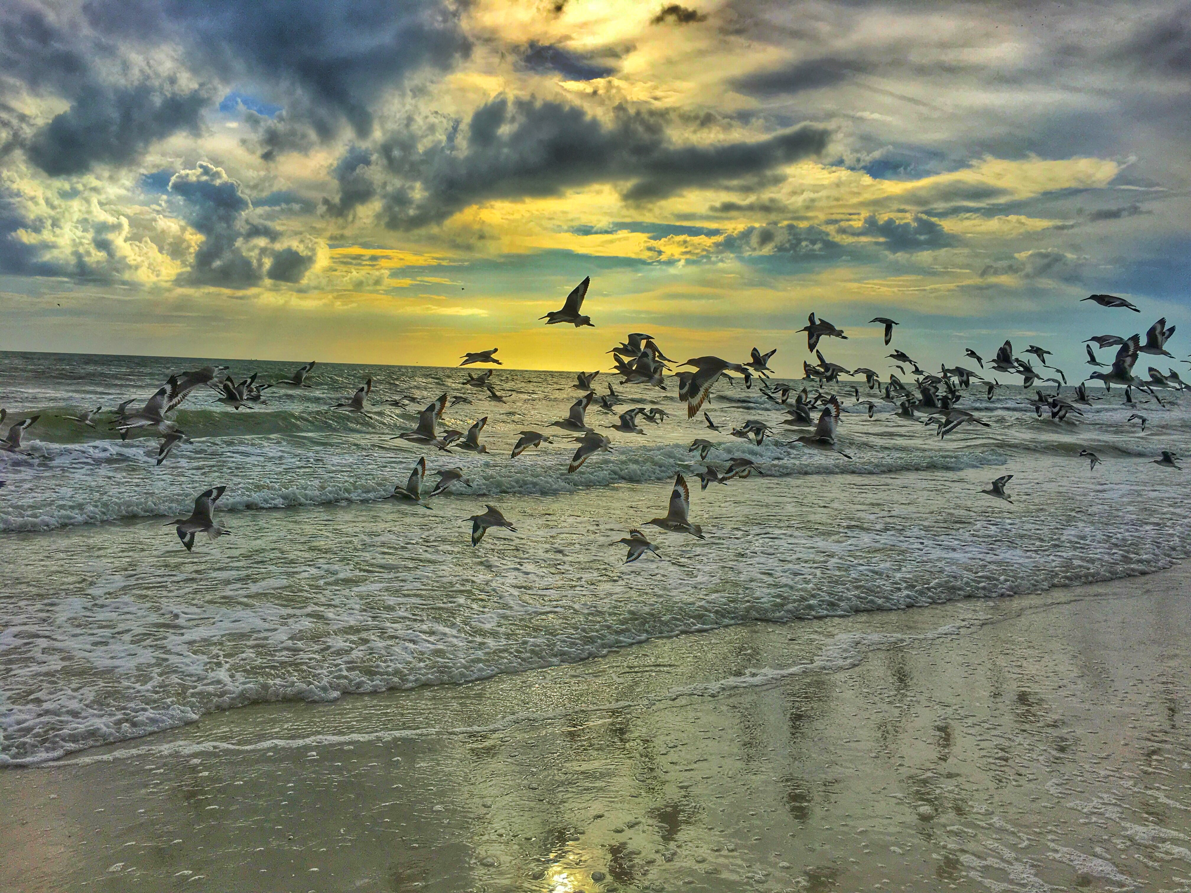 pigeons flying on seashore