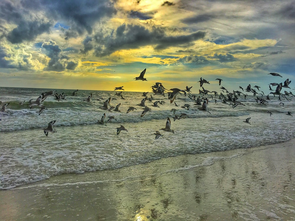 pigeons flying on seashore