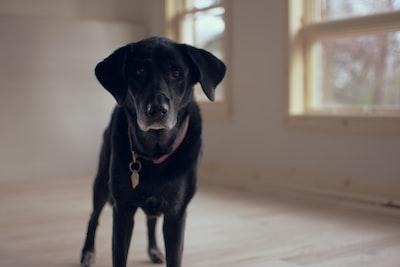4406. Kutya