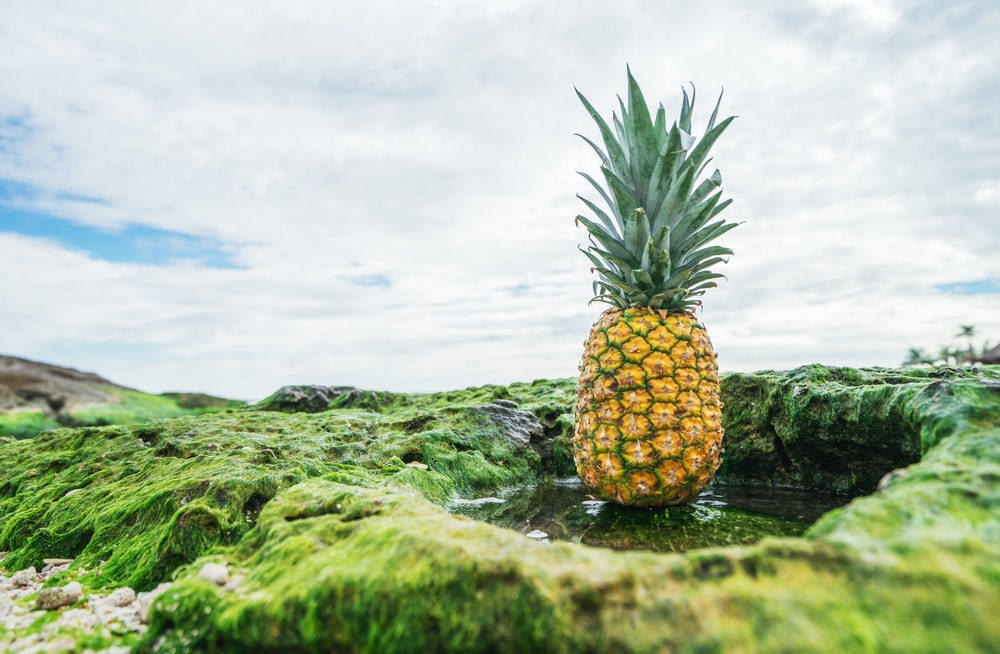 shallow focus photo of pineapple fruit
