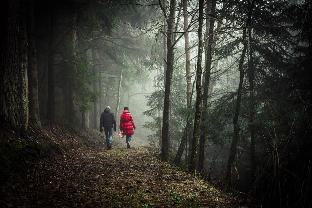 two person walking in forest during daytime